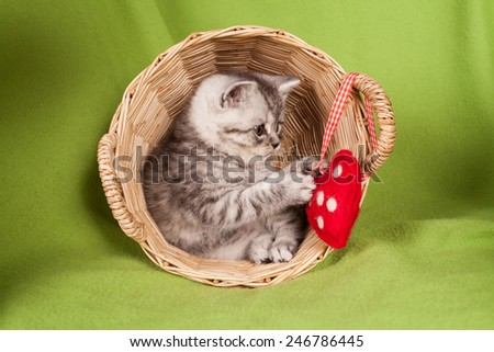 nice kitten in a basket with heart  - stock photo