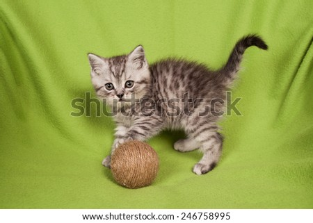 nice kitten on a green background