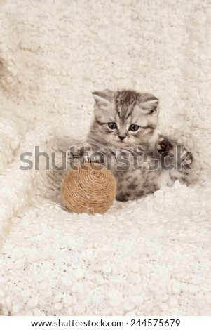 nice kitten plays with a ball  - stock photo