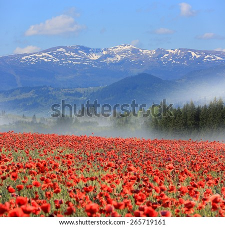 Nice landscape with meadow poppy flowers in mountains at morning time - stock photo