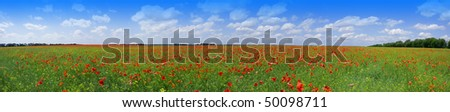 Nice large panorama of green field with bright red poppy flowers - stock photo