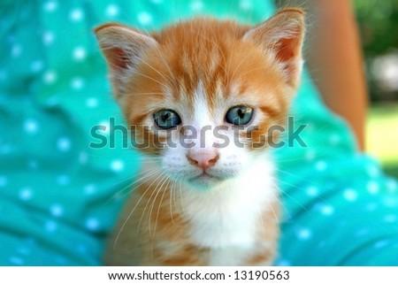 Nice little kitten on the girl's knees. - stock photo