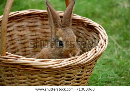 Nice little rabbit on the green garden - stock photo