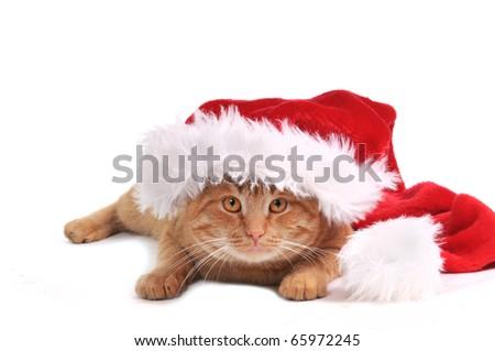 Nice orange kitten in santa hat - stock photo