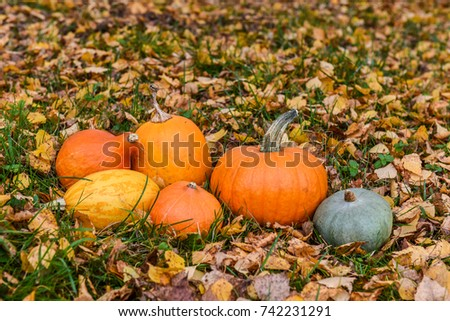 nice orange pumpkins against the background of autumn leaves with space for text or design