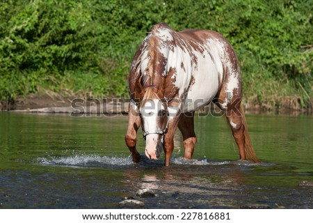 Nice paint horse in a river - stock photo