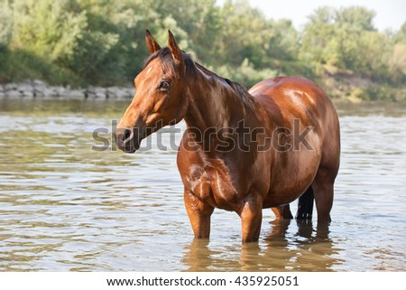 Nice paint horse on water - stock photo