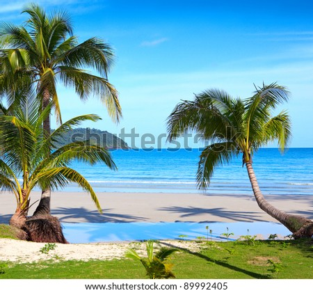Nice palm tree on white sand beach under blue sky with clouds. Tropical nature view. - stock photo