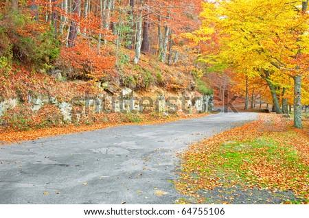 Nice park in autumn - stock photo