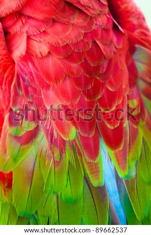 Nice parrot - Scarlet Macaw - stock photo