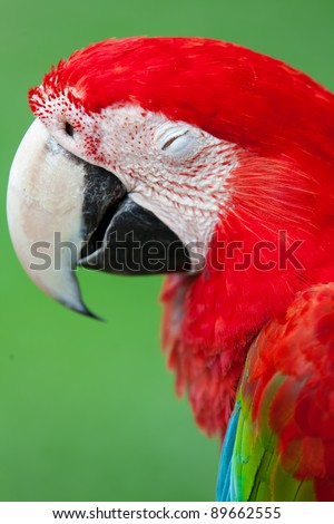 Nice parrot - Scarlet Macaw