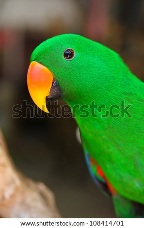 Nice parrot with a lot of green colours in zoo - stock photo