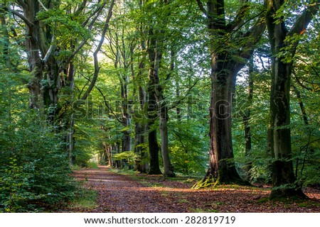 Nice path in the forest with beech trees - stock photo