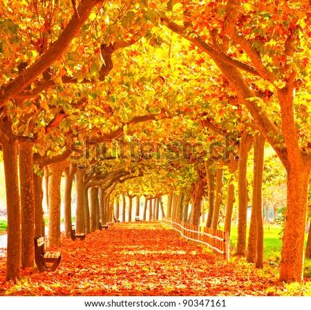Nice pathway at autumn - stock photo