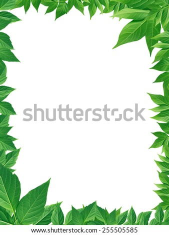 Nice picture frame made from green leaves. Ecology background - stock photo
