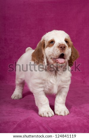 Nice puppy posing on pink background - stock photo