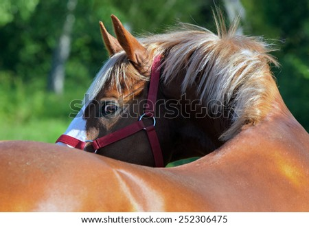 Nice purebred horse looking back - stock photo