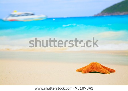nice red starfish on the sandy beach - stock photo
