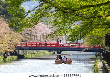 Nice sakura background for adv or others purpose use - stock photo