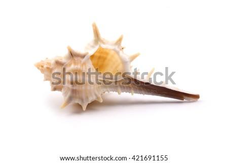Nice seashell is isolated on white background. - stock photo