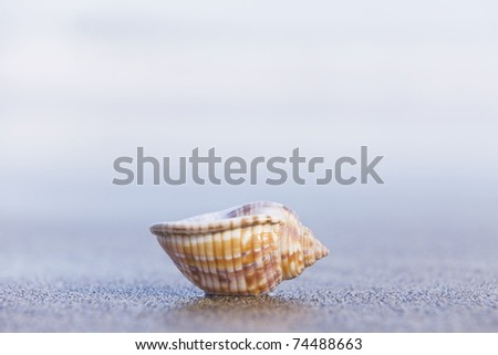 Nice seashell sitting upside down on an empty beach at dawn. - stock photo