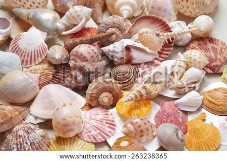 nice shells - stock photo