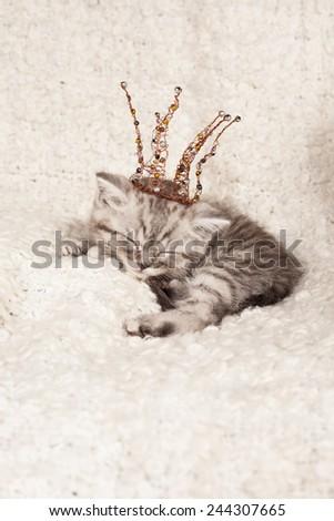 nice sleeping kitten in a crown  - stock photo