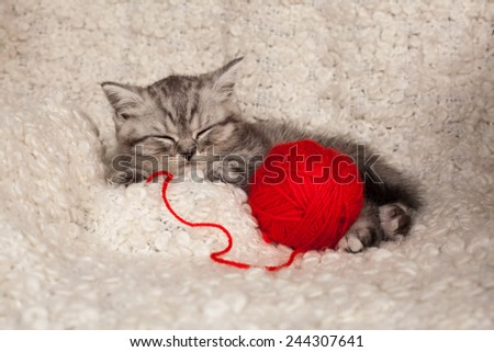 nice sleeping kitten with a ball of threads