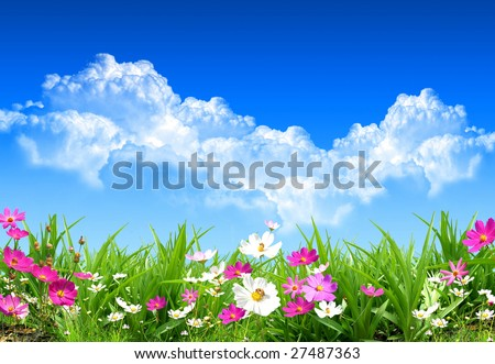Nice spring day with nice and fresh field flowers - stock photo