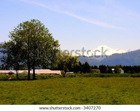 nice summer field - stock photo