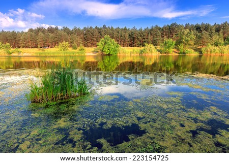 Nice summer scene on lake - stock photo