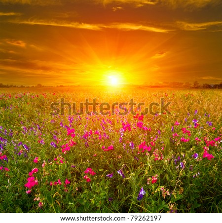 Nice summer sunset in steppe - stock photo