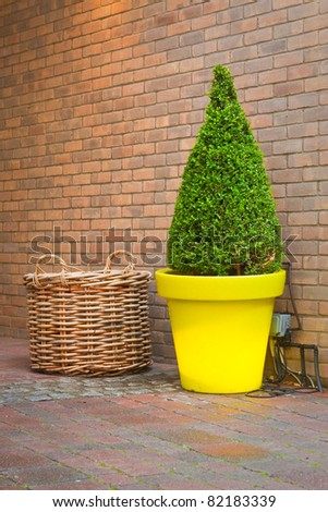 Nice topiary tree in a yellow pot