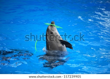 Nice trained dolphin playing with hoop in blue water - stock photo