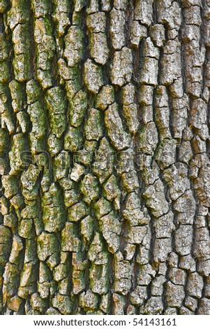 Nice tree bark texture - stock photo
