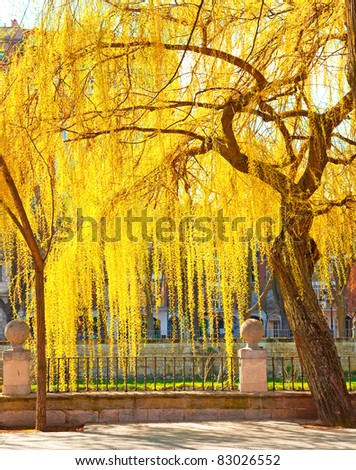 Nice tree in the park - stock photo