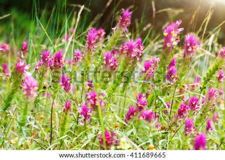 Nice view of alpine red flowers close up glowing by sunlight. Picturesque and gorgeous scene. Soft filter effect. Artistic picture. Beauty world. - stock photo