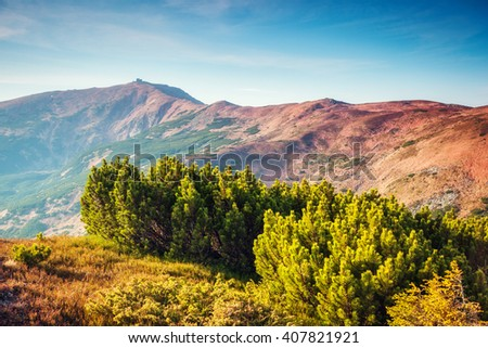 Nice view of the green hills which glowing by sunlight. Dramatic and picturesque scene. Location place Carpathian National park, Chornogora range. Ukraine, Europe. Artistic picture. Beauty world.
