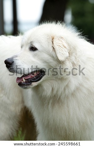 Nice white dog - stock photo