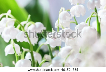 Nice white spring delicate Lily of the valley closeup