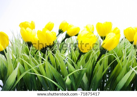 nice yellow flowers, spring time