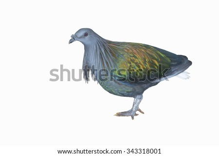 Pigoens Stock Photos, Royalty-Free Images & Vectors ...