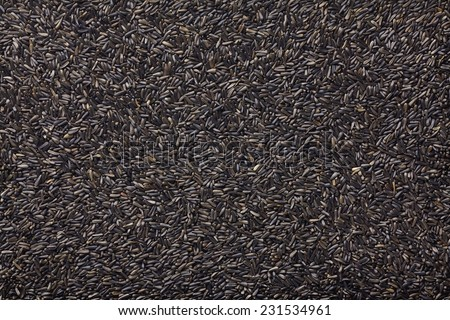 Niger seeds - stock photo