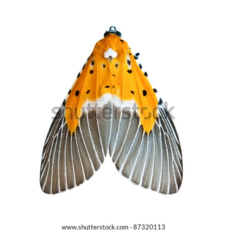 night butterfly isolate on white - stock photo