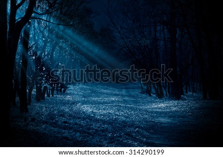 Night forest with moonlight beams - stock photo