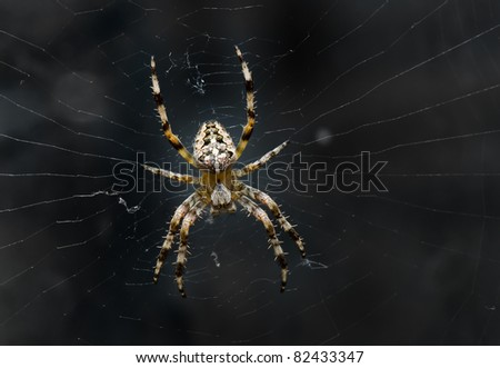 Night image of very dreadful spider on his net in the darkness. - stock photo