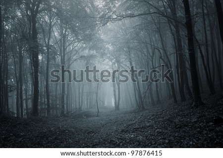 night in a dark forest - stock photo
