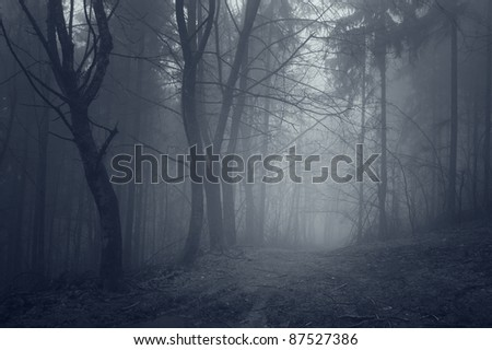 night in a dark forest with fantasy mood - stock photo