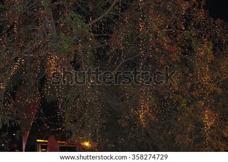 Night Nature Beauty - stock photo