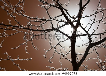 Night photo of a backlit frost covered tree - stock photo